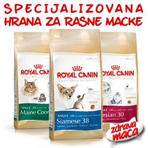 Hrana za rasne mačke - Feline Breed Nutrition