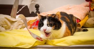 Kako da mačku naučite da vas ne grize?