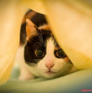 Zašto mačke vrckaju pre nego što skoče?