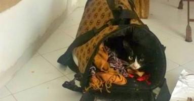 Mačka Lola preživela migraciju iz Afrike, biće vraćena vlasnici